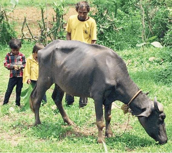 bhalaji damor
